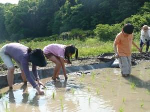 昨年5月家族で田植えを体験、千葉県館山市にて