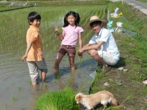 昨年5月家族で田植えを体験、千葉県館山市にて-2